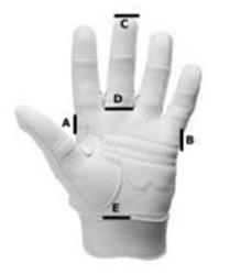 Equestrian Glove Size